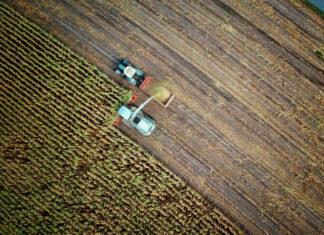 Zasady stosowania selektywnych środków ochrony roślin